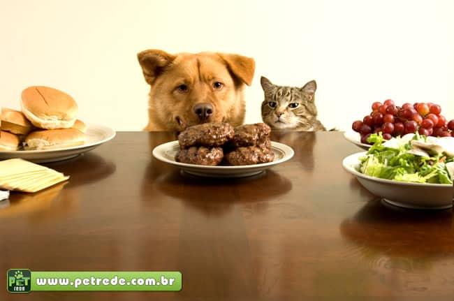 alimento-comida-toxica-animais-petrede