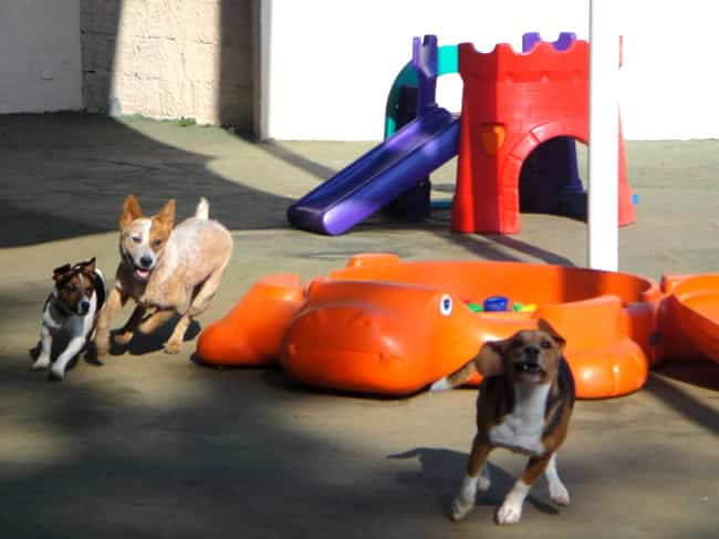 planet dog resort Planet Dog Resort oferece creche premium para cães