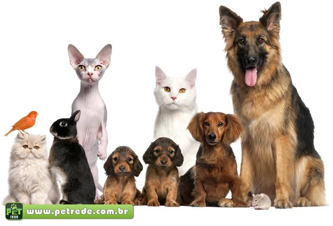 animais-cachorro-gato-coelho-passarinho-rato-petrede