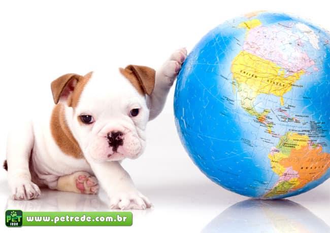 cachorro-filhote-bulldog-viagem-transporte-passaporte-petrede