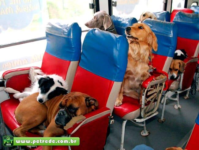 cachorros-onibus-viagem-passageiros-transporte-coletivo-petrede