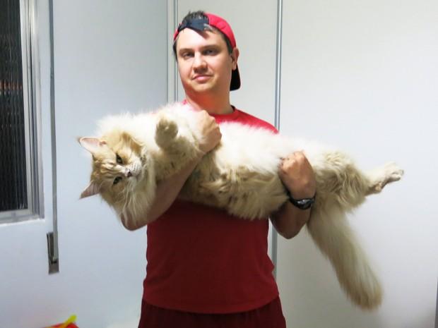 O maior gato da raça Maine Coon que o casal possui mede 1,1 metro (Foto: Rodrigo Martins/G1)