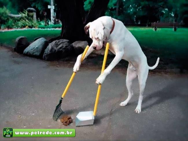 cachorro-limpando-coco-necessidades-petrede