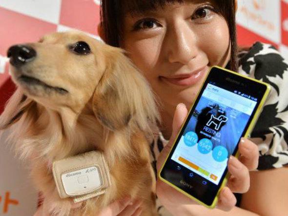 cachorro-bluetooth-celular