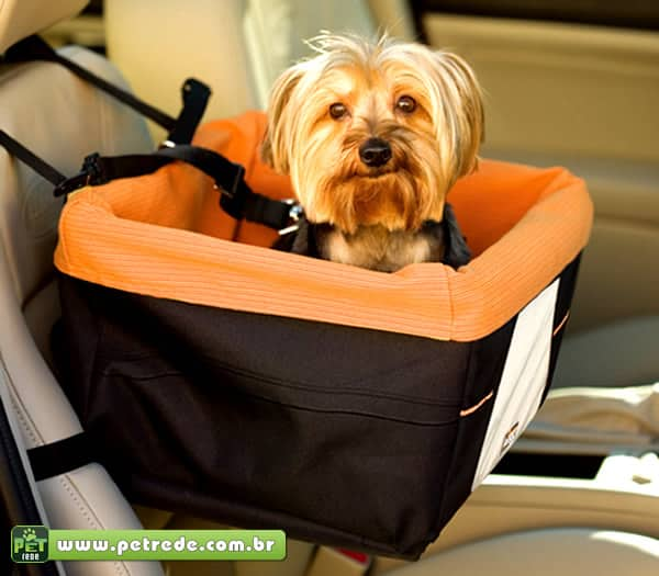cachorro-automovel-carro-cinto-seguranca-passeio-coleira-yorkshire-transporte-petrede
