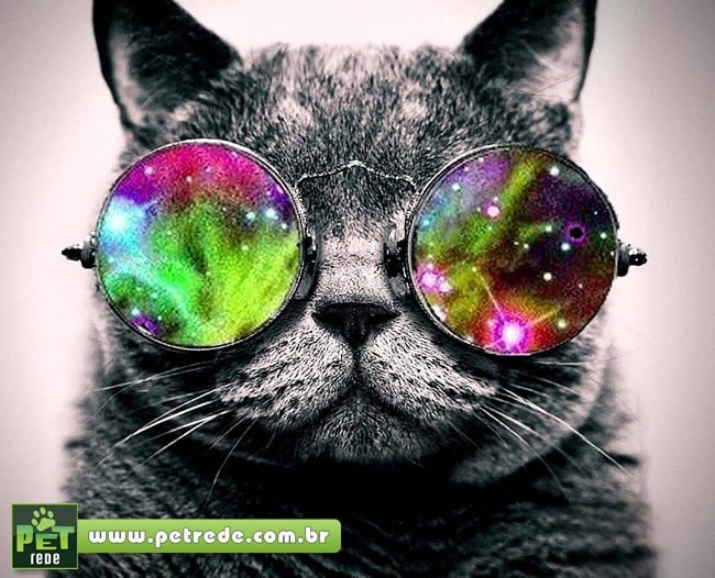 gato-oculos-psicodelico-petrede