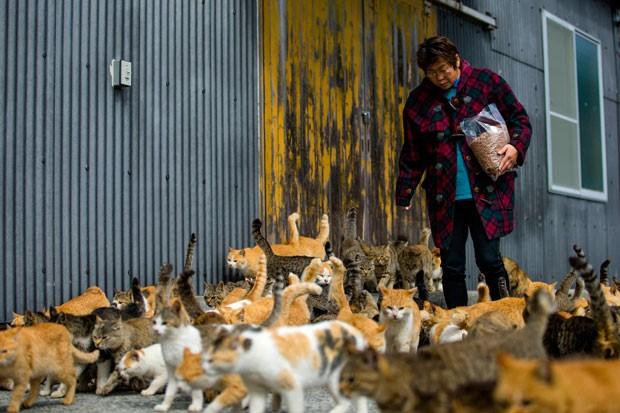 2015-03-03t070028z_1255880942_gm1eb330pfp01_rtrmadp_3_japan-cats